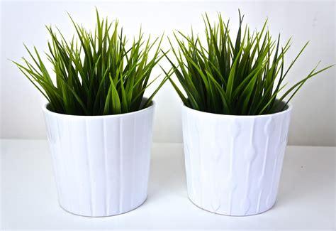 ikea plants ikea low maintenance plant greenery haul danielea com