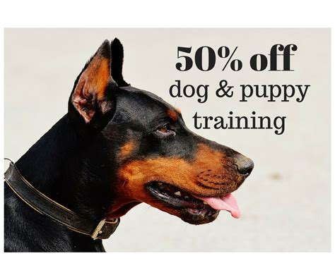 petco puppy classes 50 classes southern savers