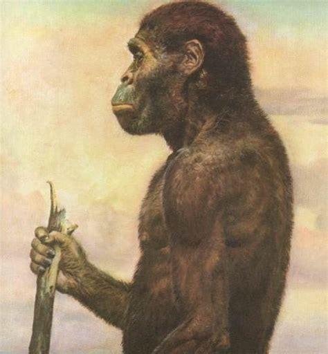 africanus el hijo del file australopithecus africanus jpg wikimedia commons