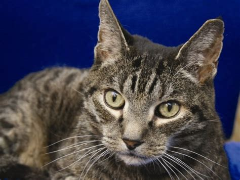 Protect From Cat by Cats Protection Set To Open Mitcham Centre And Tackle