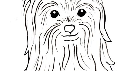 yorkshire terrier coloring pages coloring pages