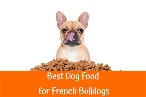best food for yorkie with allergies best food for bulldog with allergies merry photo