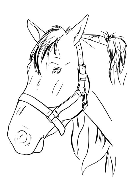 imagenes reales para colorear dibujos para colorear pintar imprimir caballos