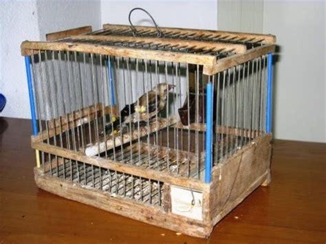 riproduzione cardellini di cattura in gabbia torrenova due bracconieri denunciati per cattura e