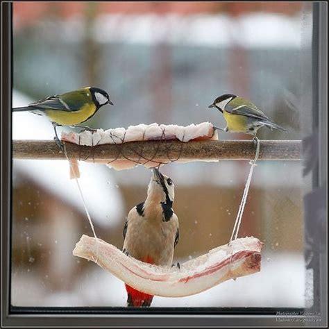 bacon bird feeder british birds mostly pinterest