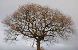 Cool Tree Cool Tree On A Dreich Day Flickr Photo Sharing