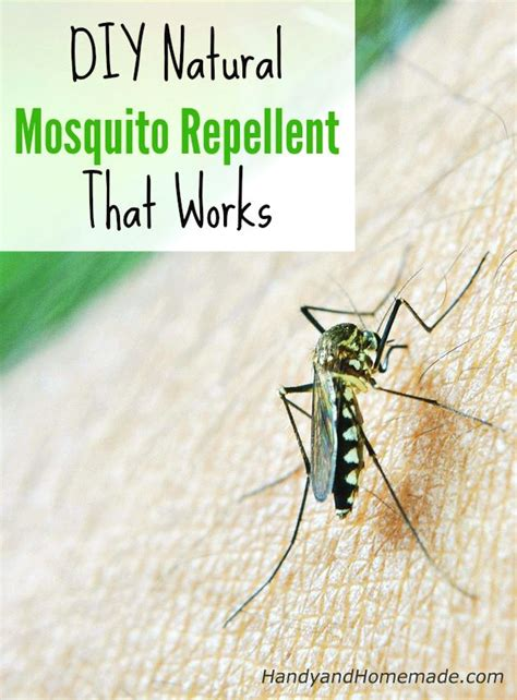 natural backyard mosquito control 25 best ideas about natural mosquito repellant on