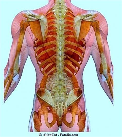 organi interni addome lato destro sintomi dei reumatismi nel sangue cura e rimedi