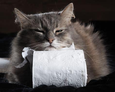 wann darf katze nach kastration wieder raus hat deine katze durchfall erste hilfe gegen durchfall