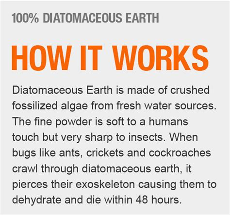 does diatomaceous earth kill bed bug eggs does diatomaceous earth kill bed bug eggs 28 images does diatomaceous earth kill