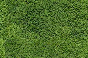 texture jpg garden hedge green