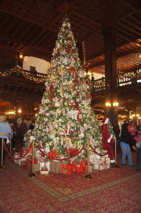 best christmas trees in san diego 28 best trees in san diego italy to light poinsettia tree nbc 7
