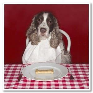 alimentazione cani casalinga astrovet l alimentazione casalinga