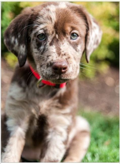 free puppies seattle amazing dogs page 5 freekibble