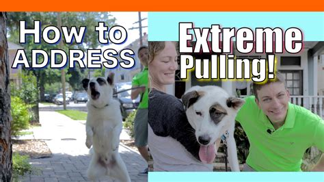 how to your to go leash how to your to not pull on a leash leash pulling barking lunging