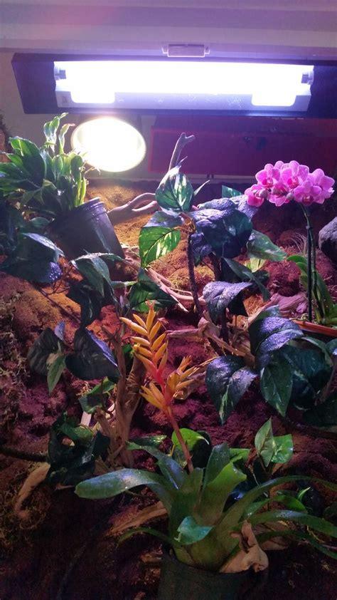 uvb light for plants 17 best images about diy chameleon enclosure vivarium on