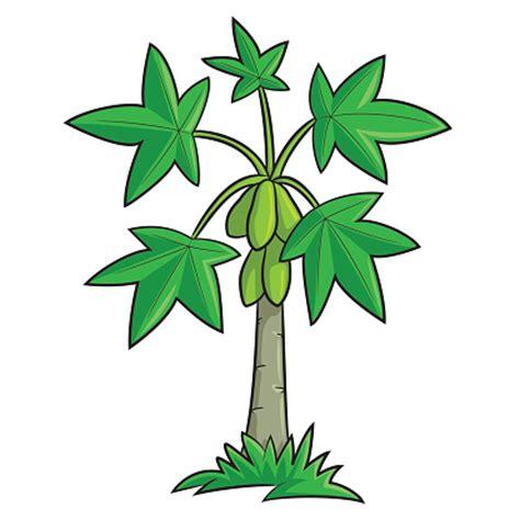 Papaya Tree Clipart papaya tree clipart clipartsgram