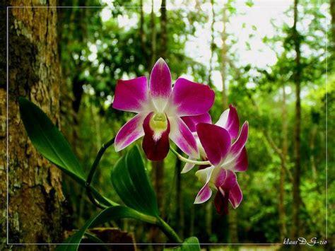 Amazonas Regenwald Pflanzen by Amazonas Regenwald Pflanzen Wanderfreunde Hainsacker