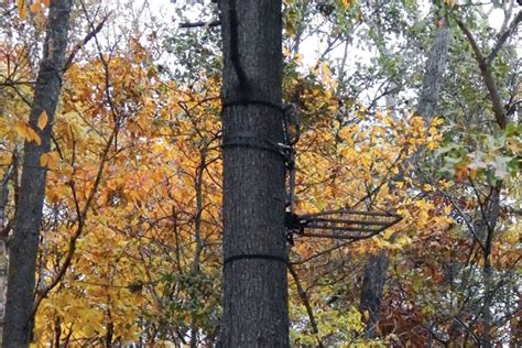 how to hang your tree leafy logic consider foliage when hanging treestands