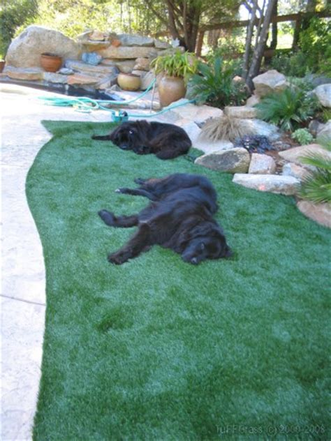 artificial grass for dogs artificial turf for dogs a great solution for your pups
