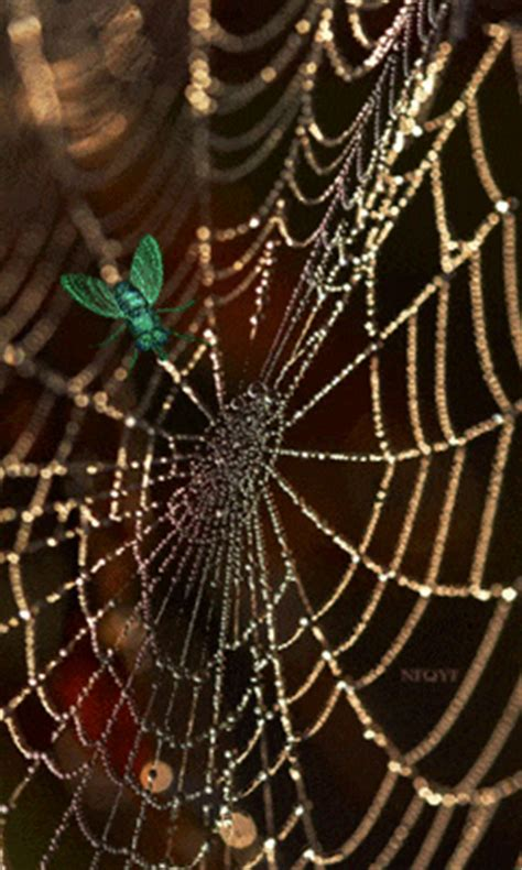 animated spiderweb pictures   images  facebook tumblr pinterest  twitter