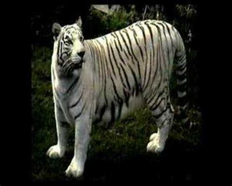 imagenes animales bellos los animales mas bellos del mundo youtube