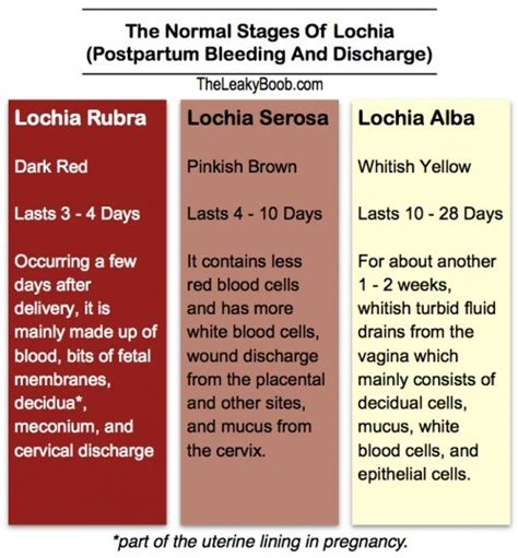menstrual cycle after c section lochia the leaky b b