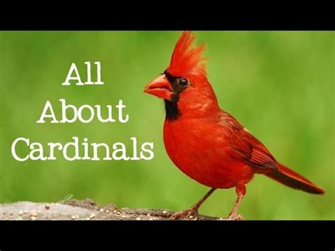 cardinalns from youtube free mp3 music download
