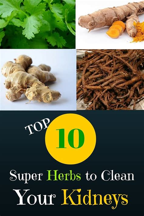Herbs To Detox Your Kidneys by 56 Best Images About Kidney Problems On Uric