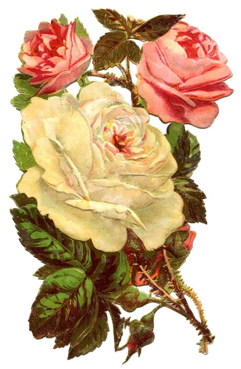 old roses antique graphic pink and white roses the graphics fairy