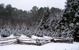 mississippi christmas tree farm east central mississippi tree farms choose and cut trees tree lots with