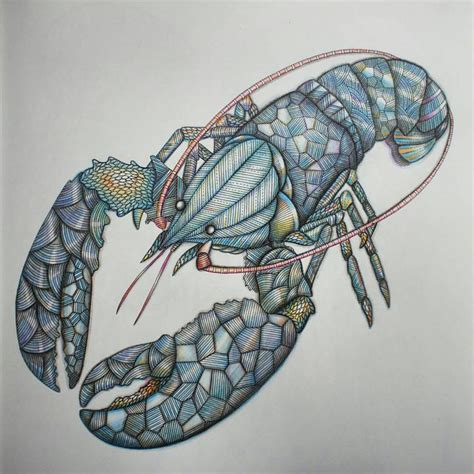libro lobster is the best 77 best libro de dibujos images on coloring coloring books and colored pencils