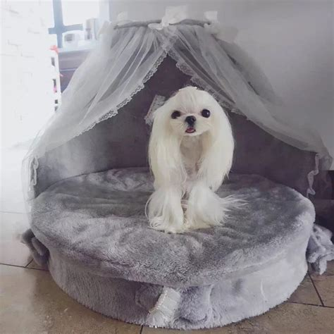 Luxury Princess Bed Lovely Cool Cat Beds Sofa M Medium mewmew luxury kennels princess bed lovely cool pet cat beds sofa teddy house suede