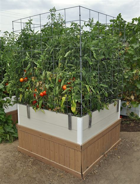 Raised Tomato Planter by Raised Beds Bar Gro Systems