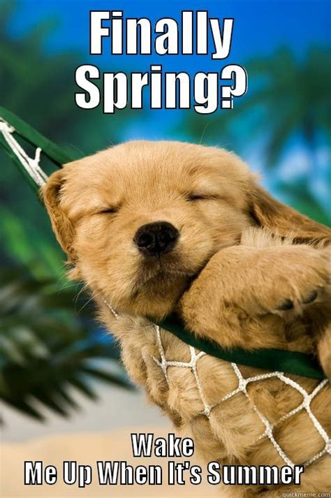 Spring Meme - finally spring quickmeme