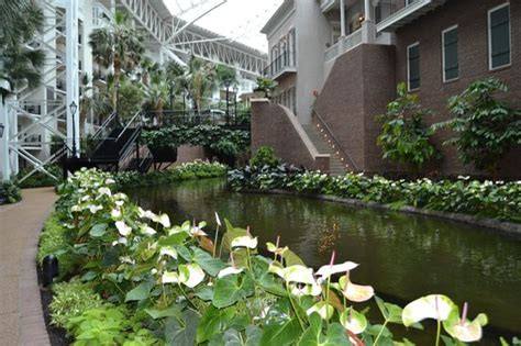 view1 picture of gaylord opryland resort gardens