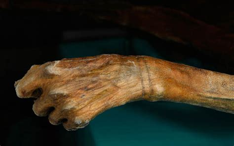 scientists discover new tattoos on 5 300 year otzi the