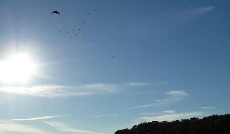 as the flies distance as the flies diana derringer