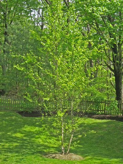 landscape trees design ideas and varieties