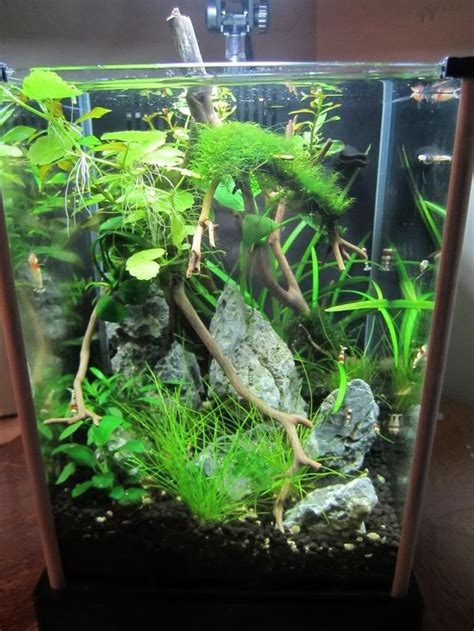 shrimp tank aquascape 2g shrimp tank fluval spec aquaria inspiration