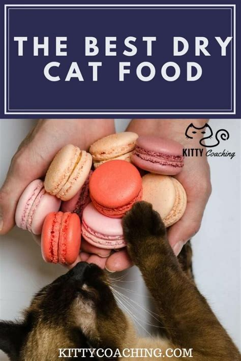 what is the best dry cat food 2018