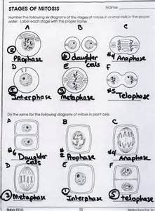 Mitosis Worksheets Answers » Home Design 2017