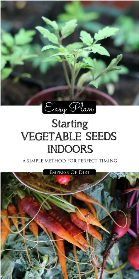 Easy Plan For Starting Vegetable Seeds Indoors Seasons Starting Indoor Vegetable Garden