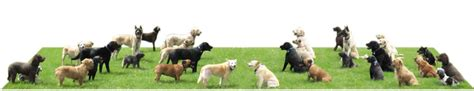 already trained therapy dogs for sale home the alpha canine