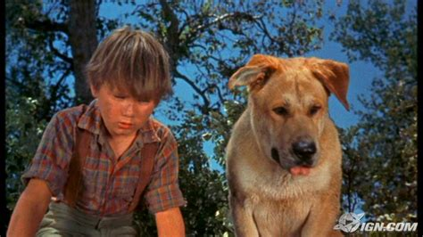 what of was yeller yeller photos yeller images ravepad the place to about anything and