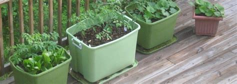 rubbermaid container garden 50 gardening tricks and tips for 2015 grabco