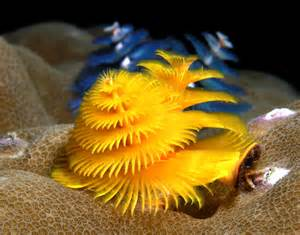 coral reef science buzz