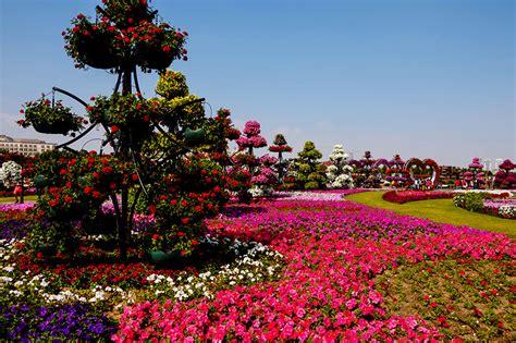 garden blumen bilder dubai vae miracle garden natur park blumen petunien