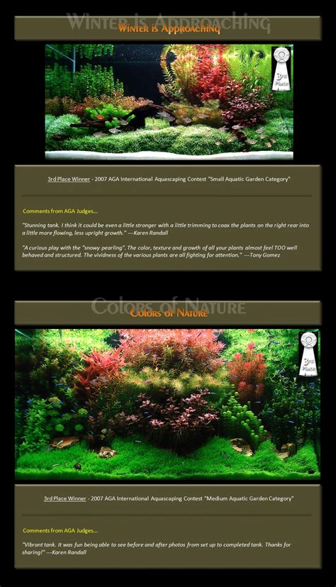 Award Winning Aquascapes Bubbles Aquarium Aquascapes Award Winning Layouts
