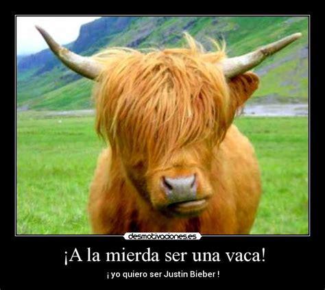 imagenes graciosas vacas im 225 genes y carteles de vaca pag 15 desmotivaciones